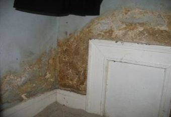 Mold can trigger asthma and allergies.