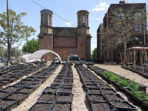Rows of potted soil prepared for planting