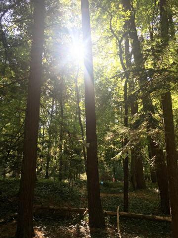 mmm-forest.jpeg