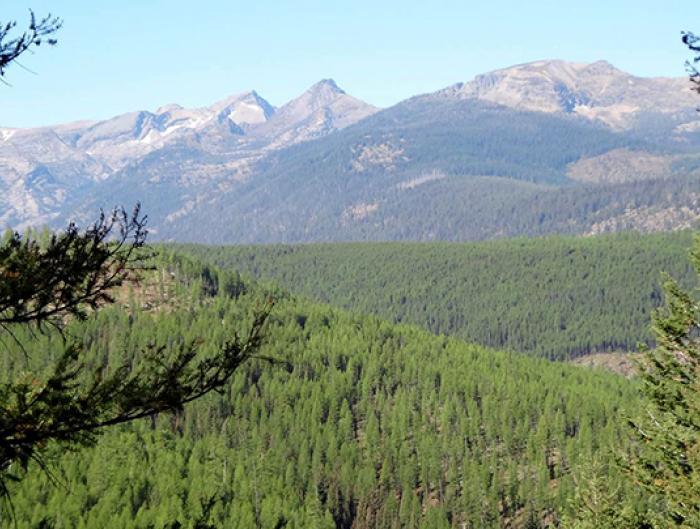 Southwestern Crown, Montana