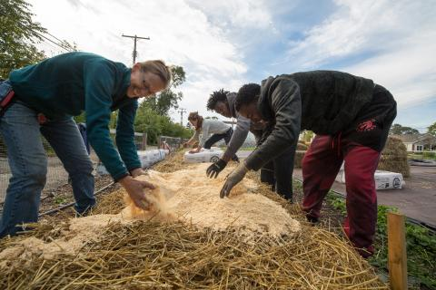 Two women and male teens bent over row of what looks to be straw and saw dust
